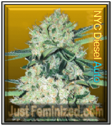 Auto NYC Diesel feminized which automatic pick and mix seeds to buy